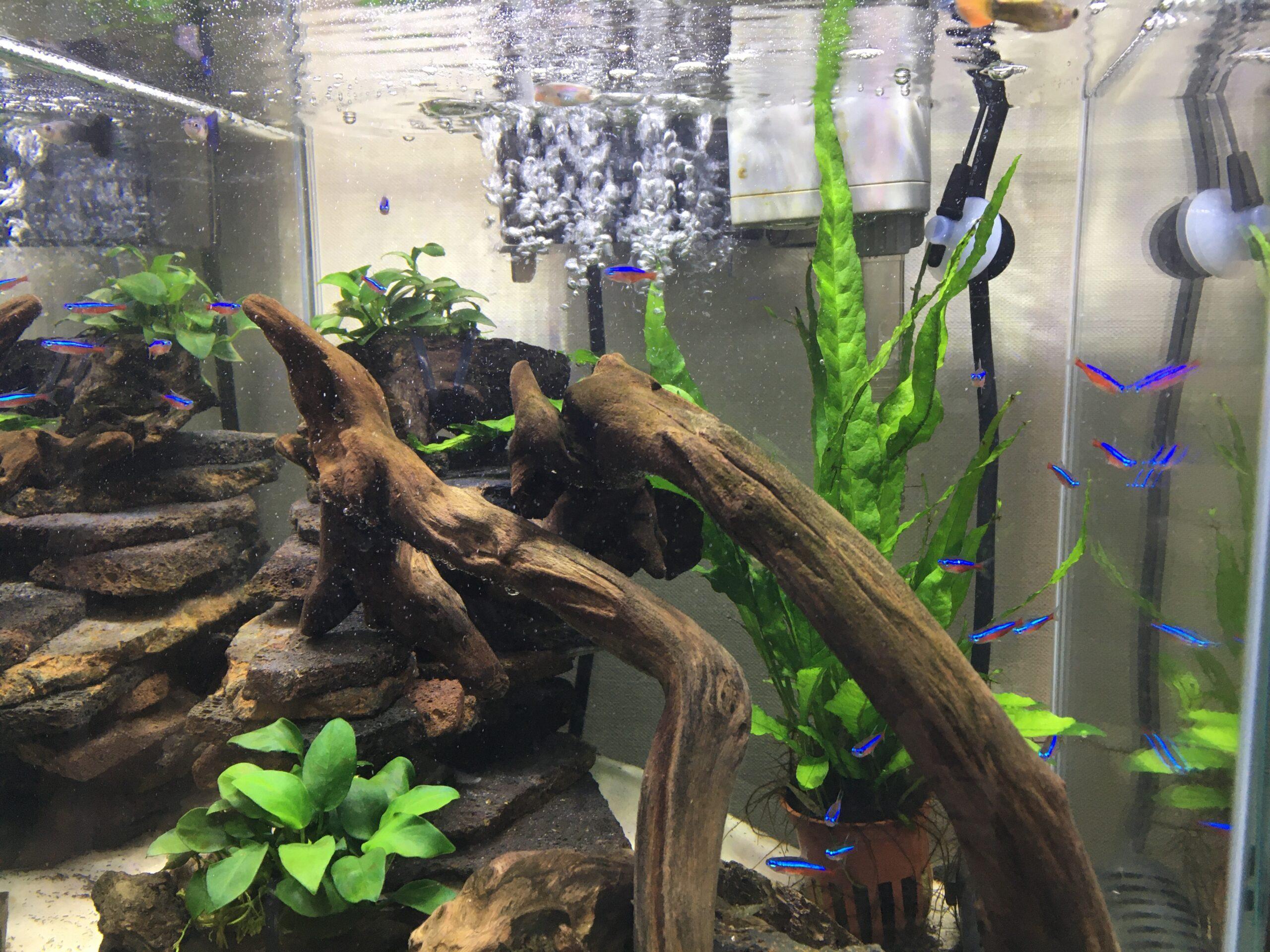 Co2 なし 水草 【アクアリウム】CO2添加なしで水草の緑の絨毯をつくる方法。ニューラージパールグラス。